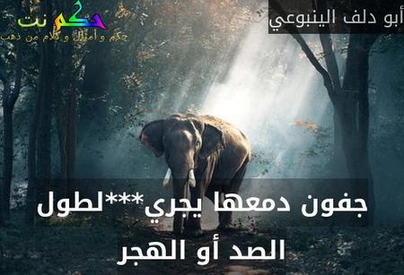 جفون دمعها يجري***لطول الصد أو الهجر-أبو دلف الينبوعي