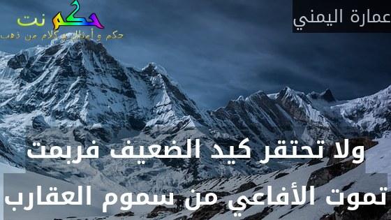 ولا تحتقر كيد الضعيف فربمت تموت الأفاعي من سموم العقارب-عمارة اليمني