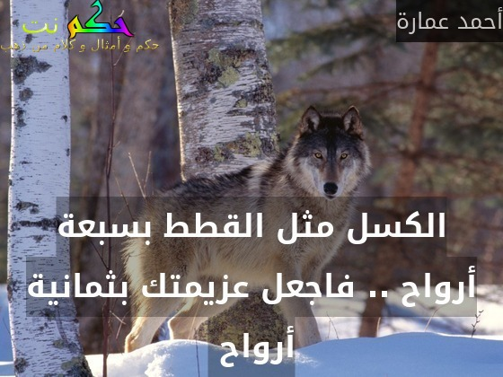 الكسل مثل القطط بسبعة أرواح .. فاجعل عزيمتك بثمانية أرواح -أحمد عمارة