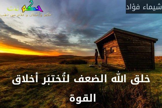 خلق الله الضعف لتُختبَر أخلاق القوة -شيماء فؤاد