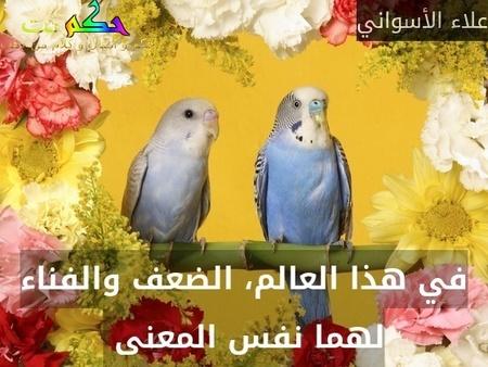 في هذا العالم، الضعف والفناء لهما نفس المعنى -علاء الأسواني
