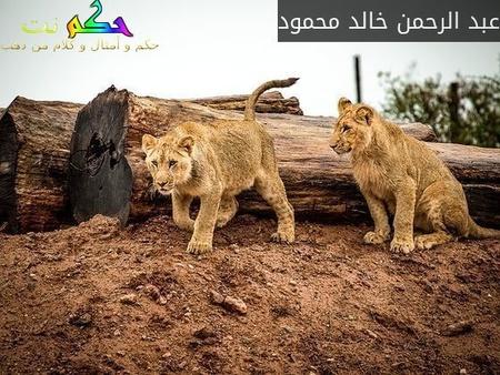 """""""إن اكرمكم عند الله اتقاكم"""" لا اغناكم ولا اقواكم.-عبد الرحمن خالد محمود"""