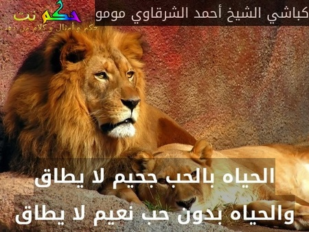 الحياه بالحب جحيم لا يطاق والحياه بدون حب نعيم لا يطاق-كباشي الشيخ أحمد الشرقاوي مومو