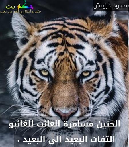 الحنين مسامرة الغائب للغائبو التفات البعيد إلى البعيد . -محمود درويش