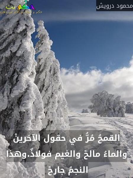 القمحُ مُرُّ في حقول الآخرينْ والماءُ مالحْ والغيم فولاذٌ.وهذا النجمُ جارحْ -محمود درويش