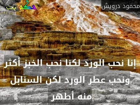 إنا نحب الورد لكنا نحب الخبز أكثر ونحب عطر الورد لكن السنابل منه أطهر -محمود درويش