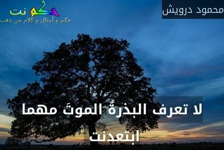 لا تعرف البذرةُ الموتَ مهما ابتعدنت -محمود درويش