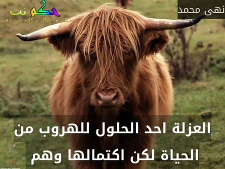 العزلة احد الحلول للهروب من الحياة لكن اكتمالها وهم -نهى محمد