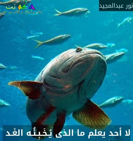 لا أحد يعلم ما الذى يُـخَـبِـئُـه الغَـد -نور عبدالمجيد