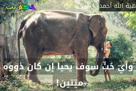 وأيّ حُبٍّ سوف يحيا إن كان ذووه ميّتين! -هبة الله أحمد