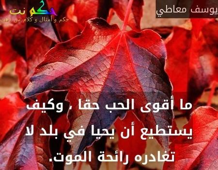 ما أقوى الحب حقا ، وكيف يستطيع أن يحيا في بلد لا تغادره رائحة الموت. -يوسف معاطي
