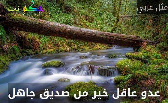 عدو عاقل خير من صديق جاهل-مثل عربي