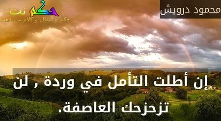 إن أطلت التأمل في وردة , لن تزحزحك العاصفة. -محمود درويش