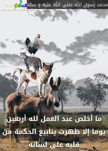 ما أخلص عبد العمل لله أربعين يوما إلا ظهرت ينابيع الحكمة من قلبه على لسانه-محمد رسول الله صلى الله عليه و سلم