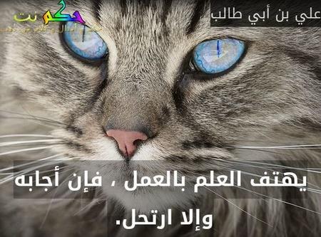 يهتف العلم بالعمل ، فإن أجابه وإلا ارتحل. -علي بن أبي طالب