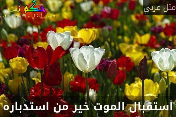 استقبال الموت خير من استدباره-مثل عربي