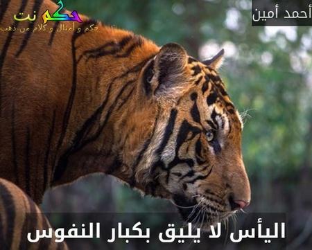 اليأس لا يليق بكبار النفوس-أحمد أمين
