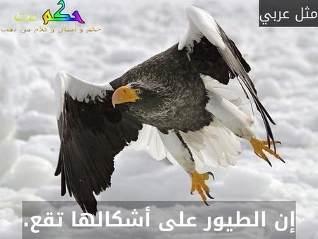 إن الطيور على أشكالها تقع.-مثل عربي